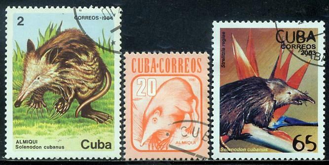 """毒持つ""""謎の哺乳類""""捕獲! キューバで日本の研究者ら"""
