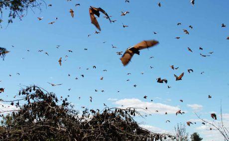 18万匹のコウモリが町に大量発生