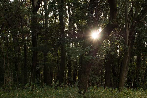 森林公園-12