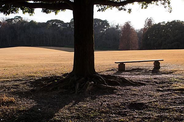 森林公園-13