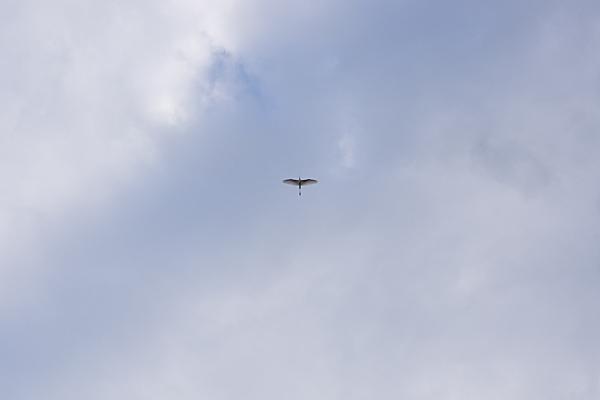 鳥風景-2