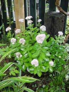 my-garden 017 (3)