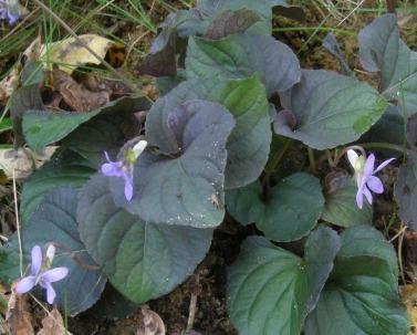 my-garden 022 (4)
