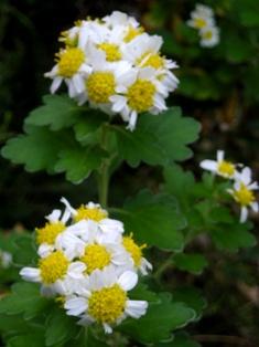my-garden 080 (2)