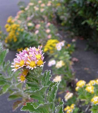my-garden 073