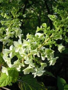 my-garden 005 (4)