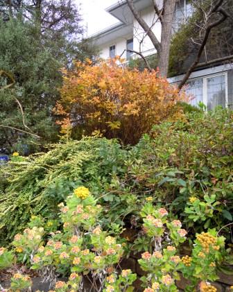 my-garden 018 (2)