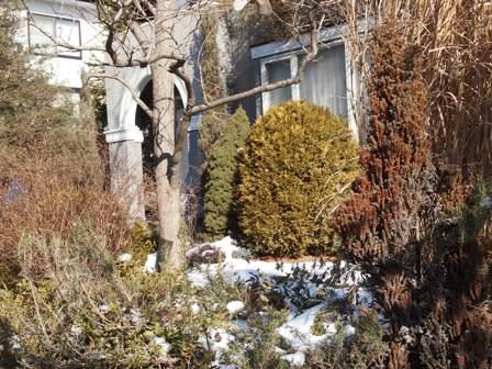 my-garden 007 (4)