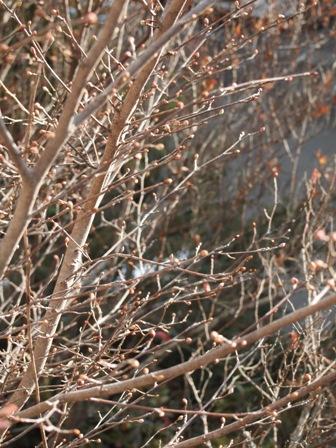 my-garden 051 (2)
