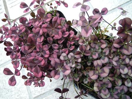 my-garden 038 (2)