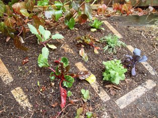 my-garden 034