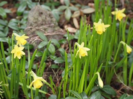 my-garden 041 (2)