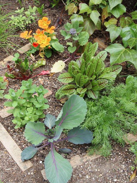 my-garden 012 (4)