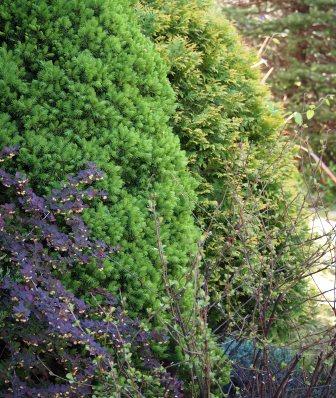 my-garden 020