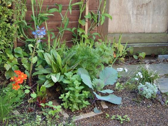 my-garden 046