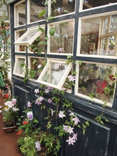my-garden 235