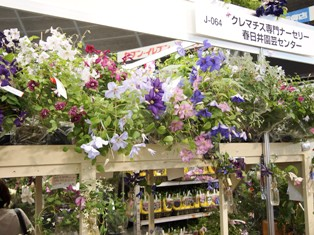 my-garden 295