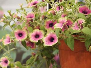 my-garden 303