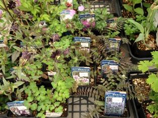 my-garden 281