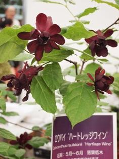 my-garden 318