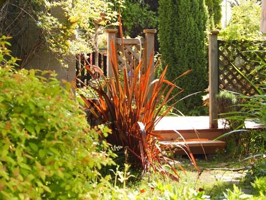 my-garden 047 (2)