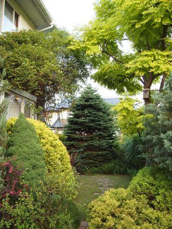 my-garden 059 (2)