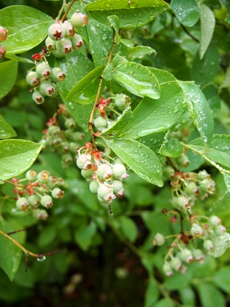 my-garden 041 (3)
