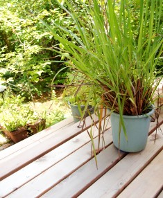 my-garden 015 (2)