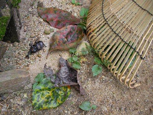 落ち葉と夏の虫①