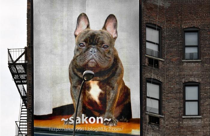 sakon