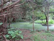 $都内で野鳥撮影-大野山林 池