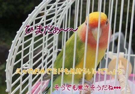 201410271750452a9.jpg