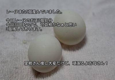 20141110174920d61.jpg