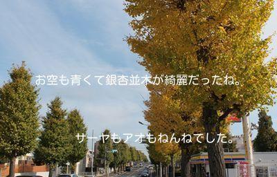 201411162313438c2.jpg