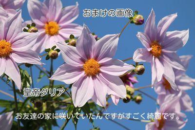2014112723474067a.jpg