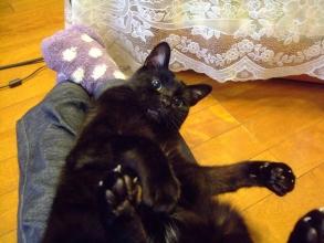 黒猫のタコちゃん♂黒猫のターコターコターコぼくの恋人は黒い猫(^-^)元気です♪2013.12.19