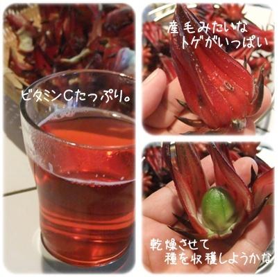 ローゼル茶