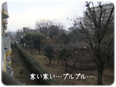 2012_02180003.jpg