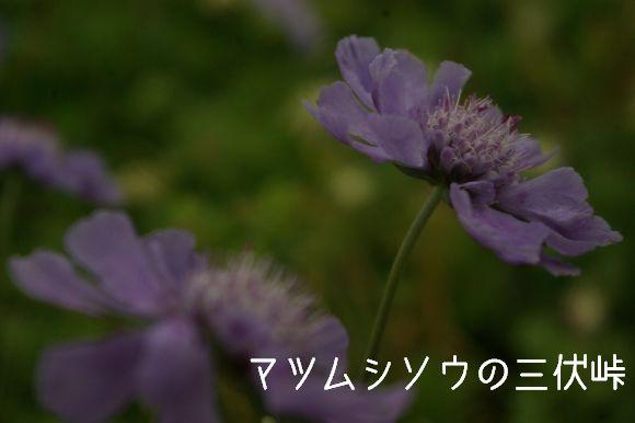 100822_999.jpg