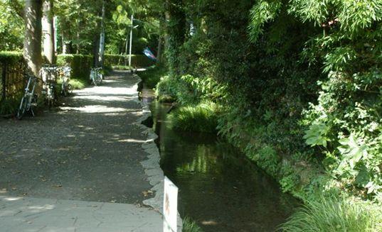 湧水の流れるお鷹の道 myわんこのお散歩コースです