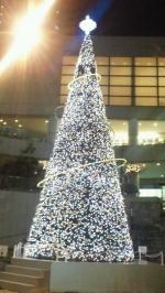 1312_tree.jpg